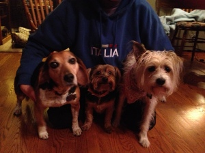 Howie, Reggie & Teddy.  Nana & Nonno had a full house during flood-a-palooza.